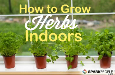 How to Start an Indoor Herb Garden
