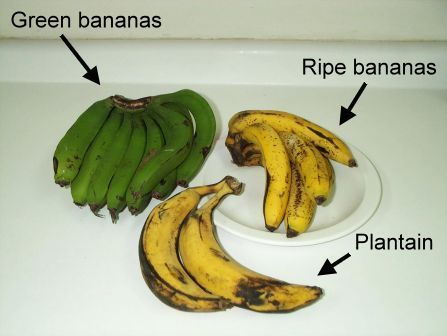 Tropical Plantains