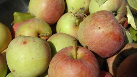 Samantha's Applesauce