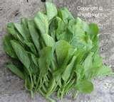 mixed salad 43C
