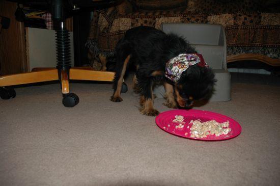 Bella's dog food