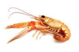 Shrimp Fillo Cups w/ Creme Fraiche