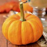 nancy's pumpkin custard