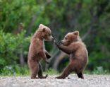 Bear Foods