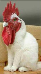 Wanda's Chicken favorites