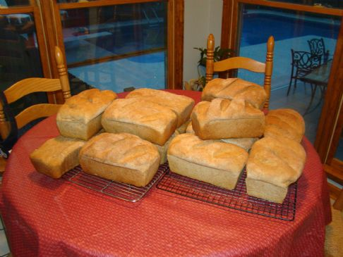 My Whole Wheat Bread